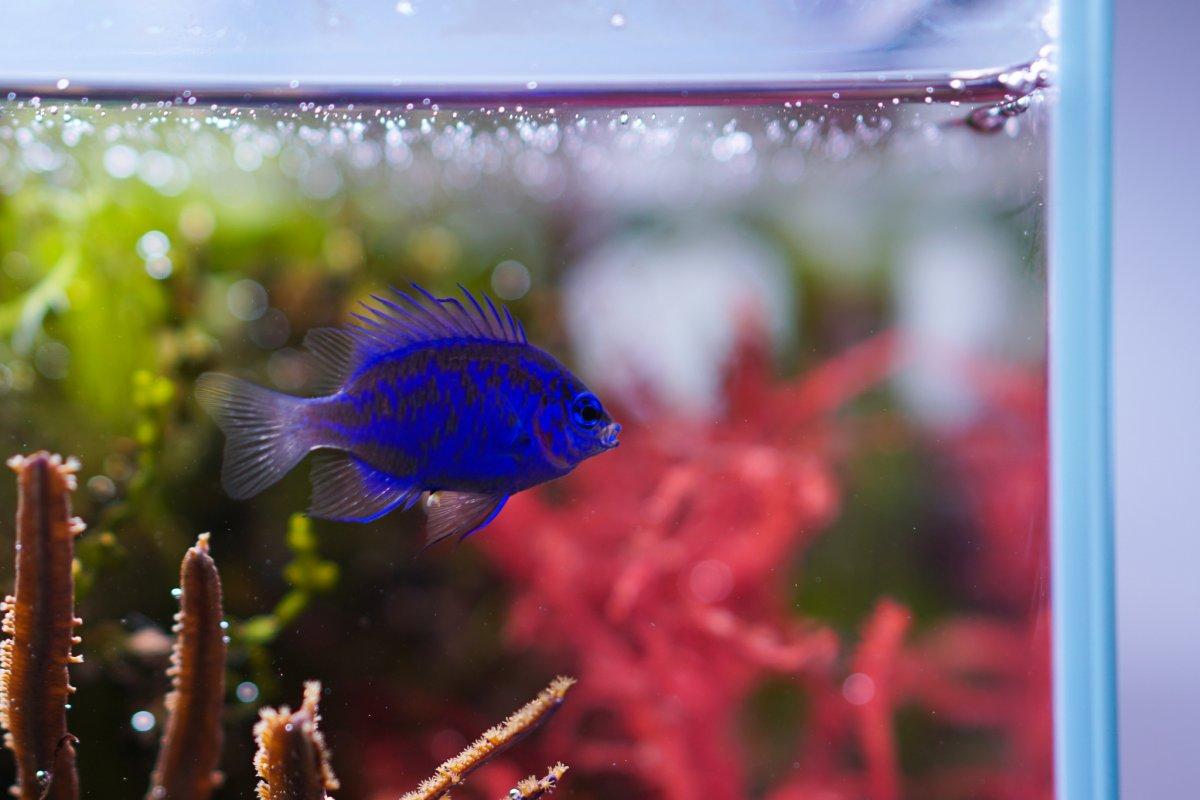 fish 3.jpeg