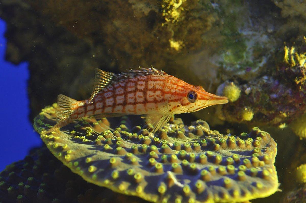 fish 4.jpeg