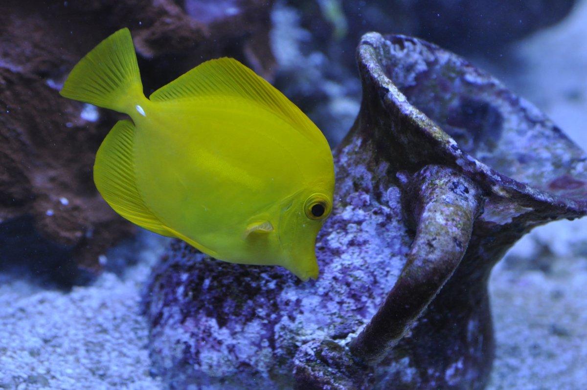 fish 5.jpeg
