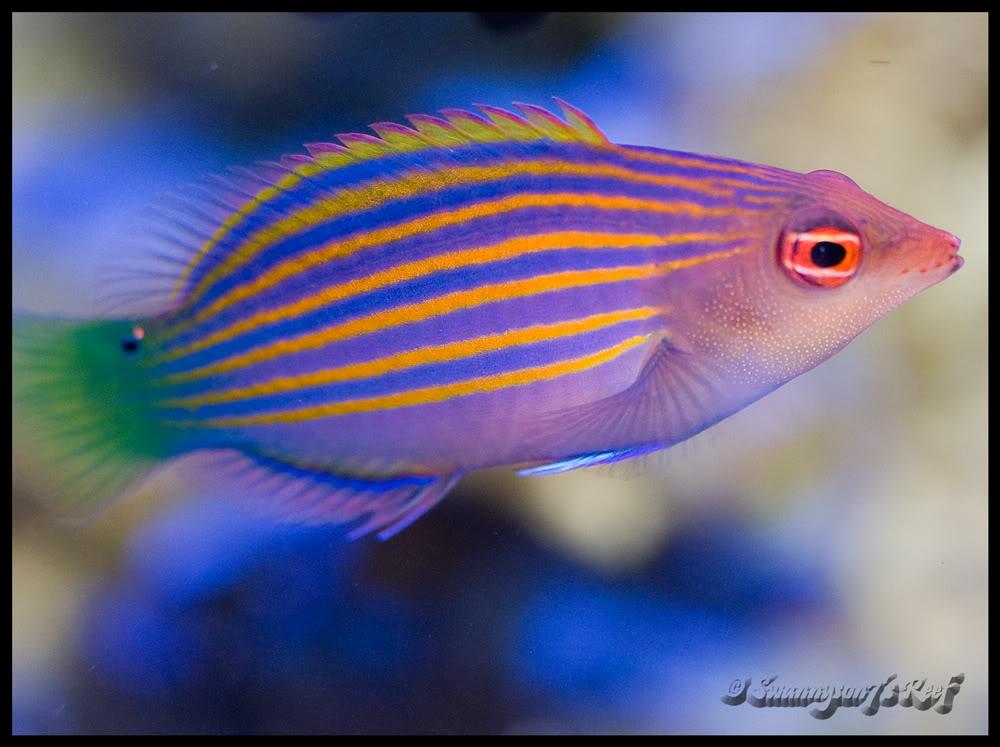 fish 6 line.jpg