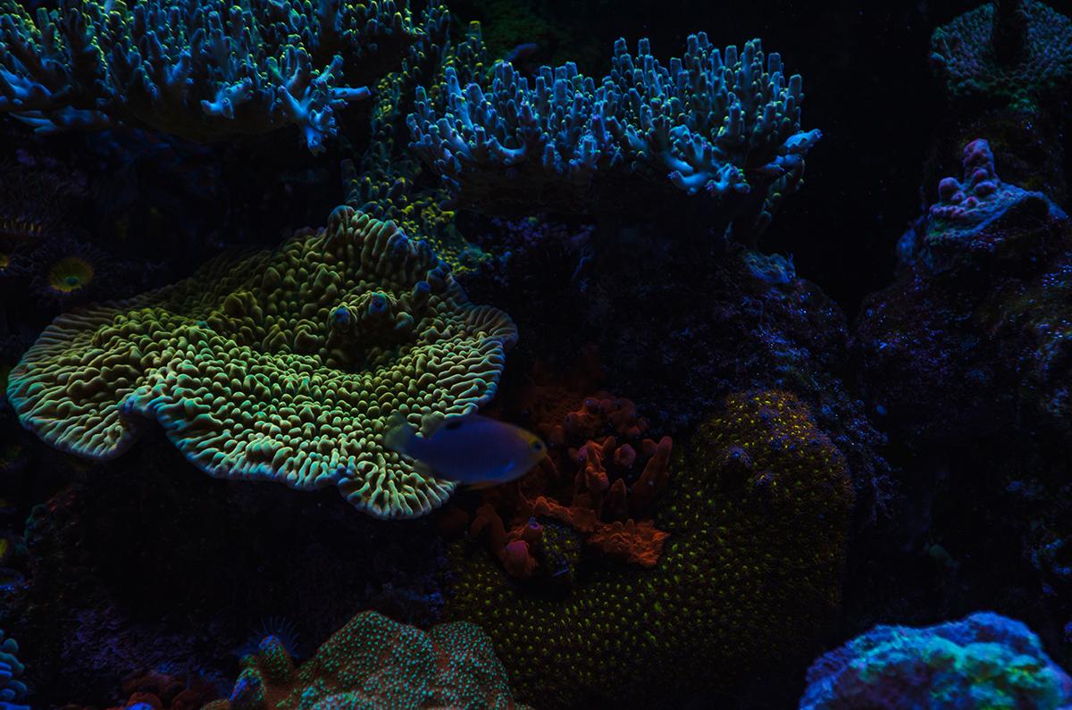 fish-8.jpg