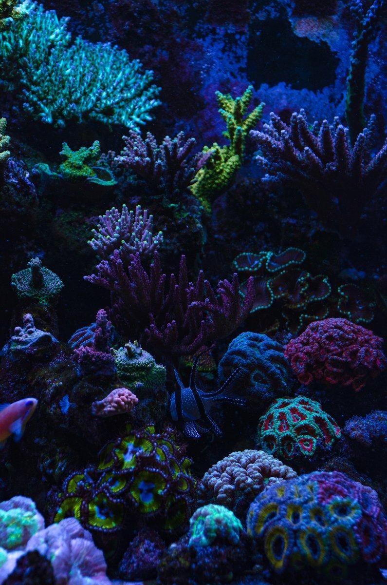 fish-9.jpg