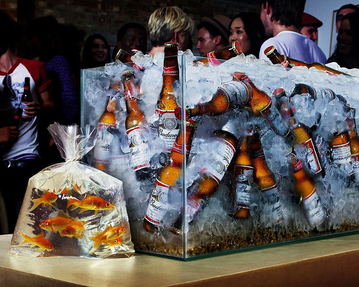 fish-aquarium-beer-wallpaper-preview.jpg