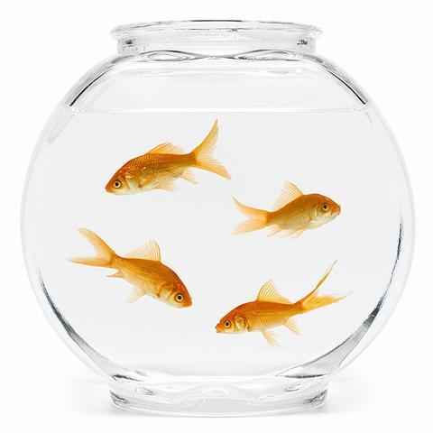 fish-bowl-600_large.jpg