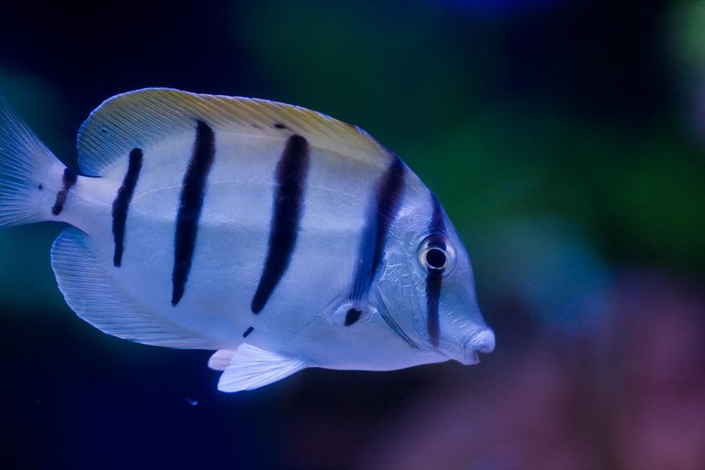 fish convict t.jpg