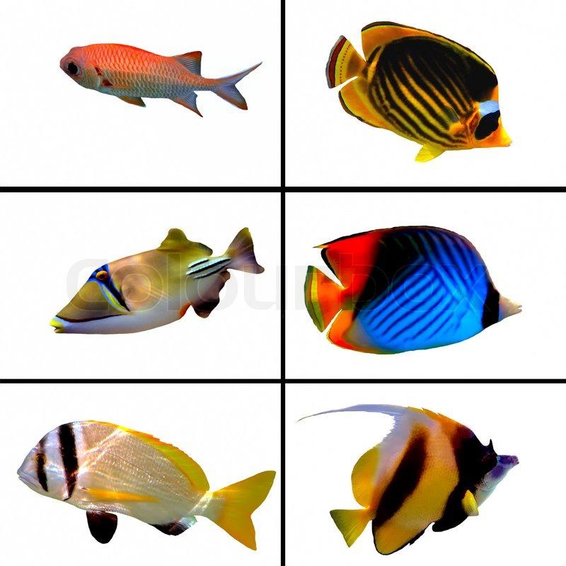 New Film To Expose Aquarium Fisheries Dark Side