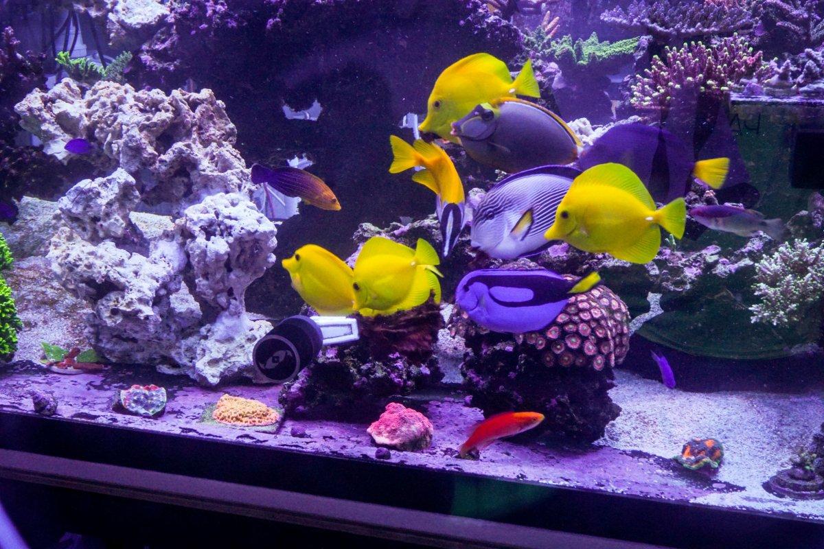 Fish Resize.jpg