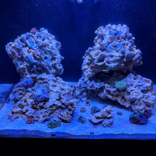 Fish Tank 1.jpg