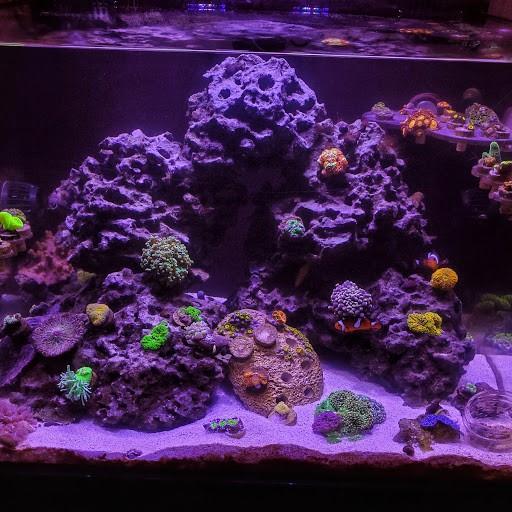 Fish Tank 2.jpg