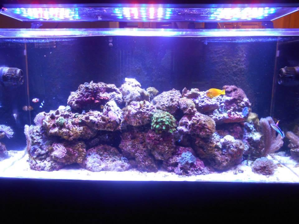 Conductivity Of Reef Tank : Gallon build reef saltwater and aquarium forum