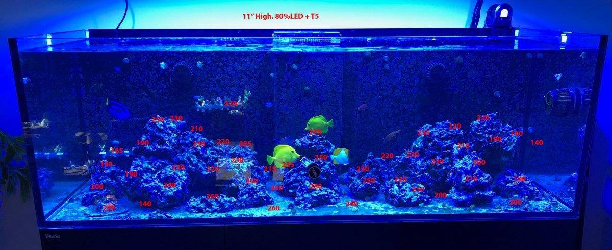 Fish Tank Par Hybrid 80 11inch.jpg