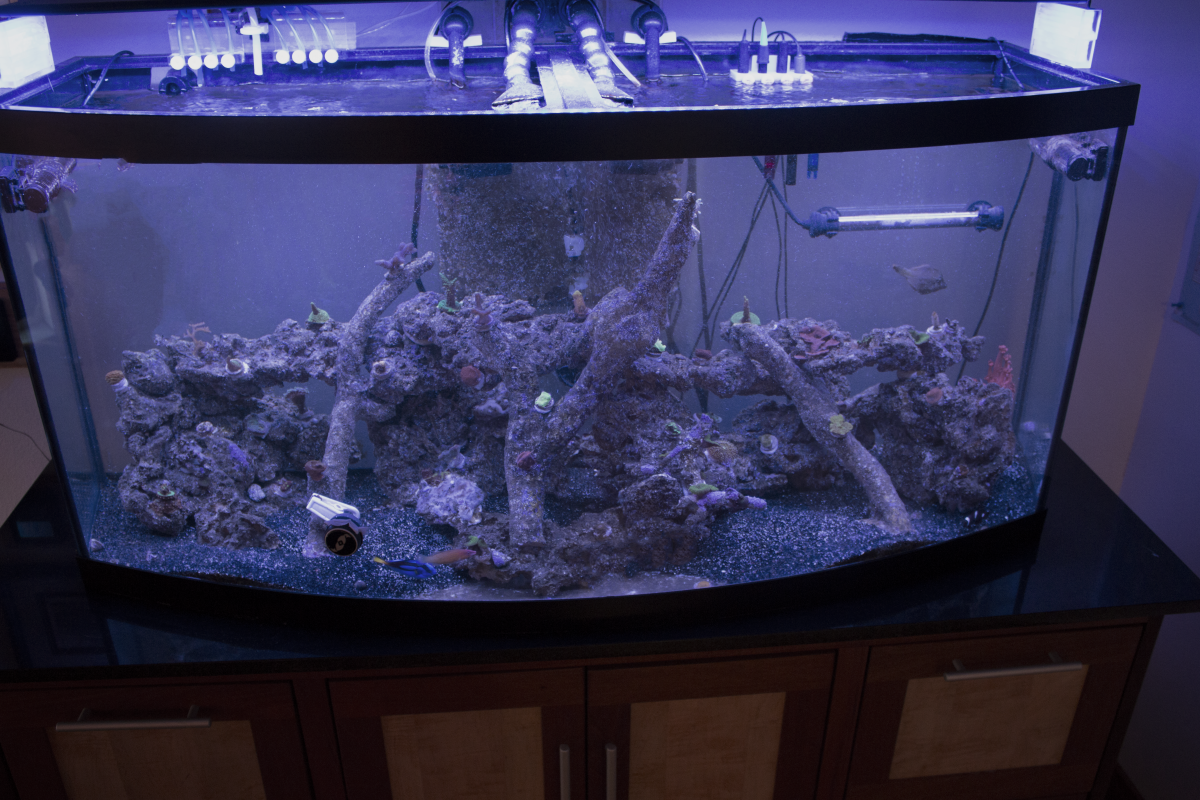 Tanks Based On Aquaforest Products Reef2reef Saltwater