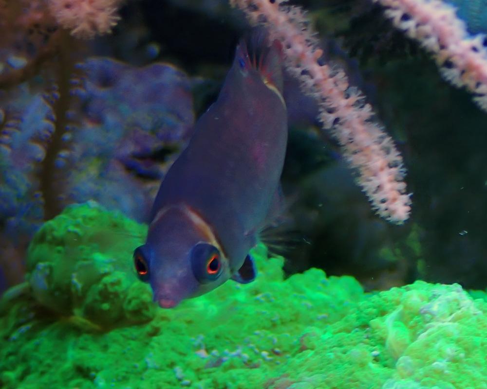 fish3-jpg.1772587