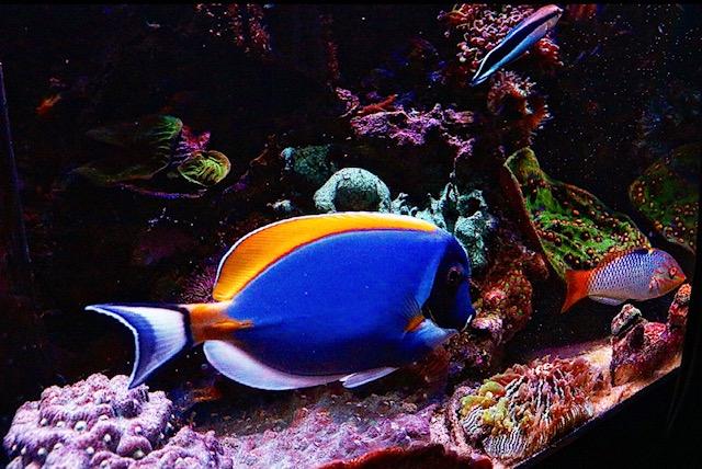 fish5.jpeg