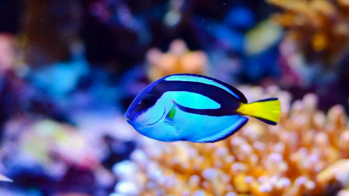fish7.jpg