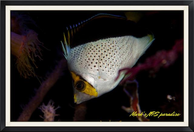 fish8.jpg