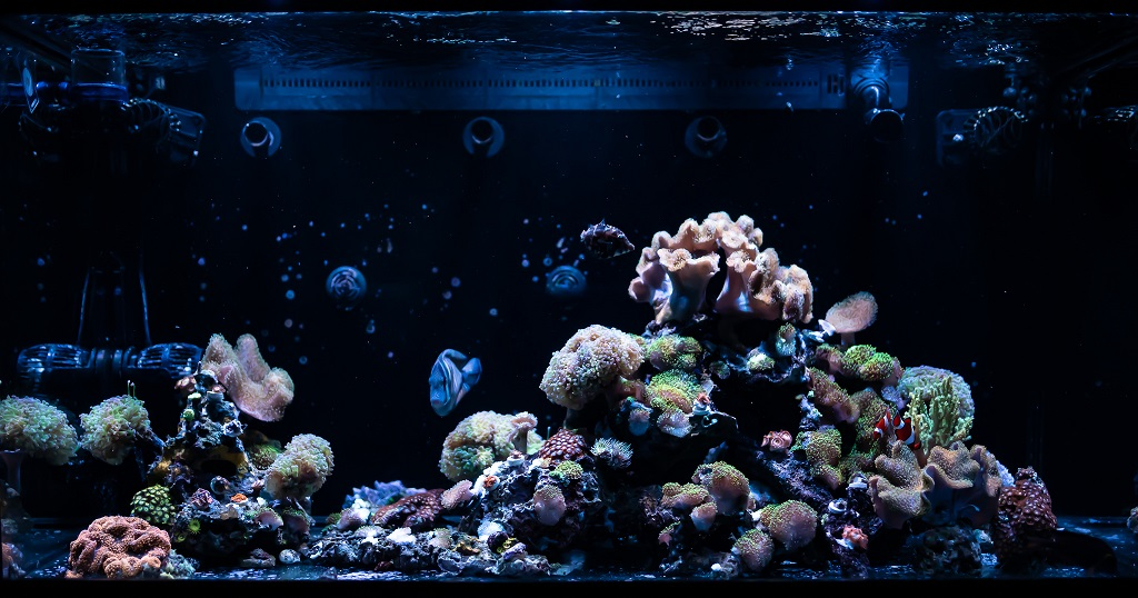 fishtank-1-small.jpg