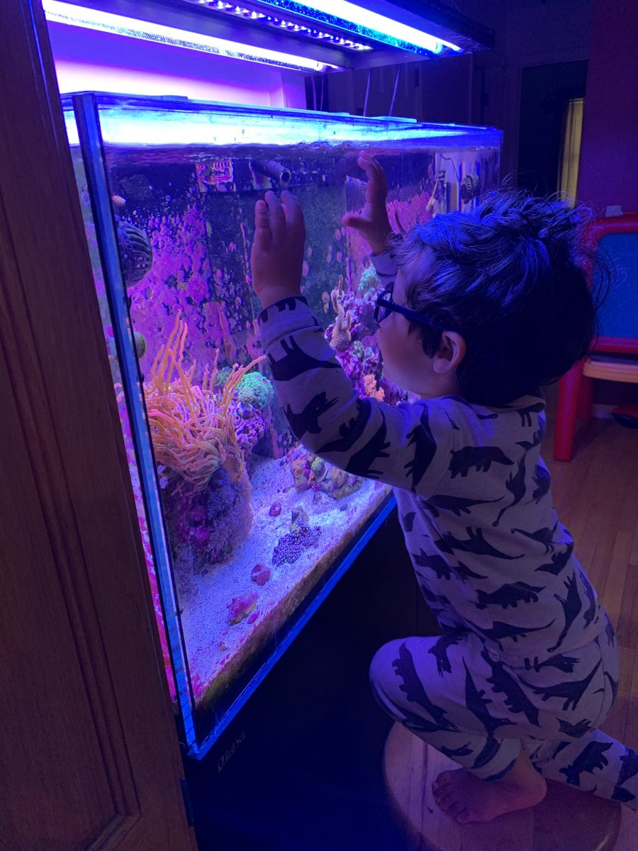 fishtank kid.jpg
