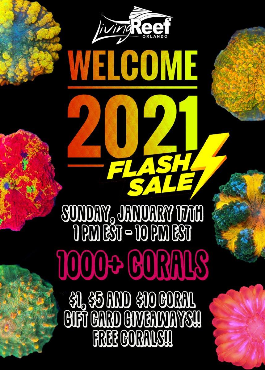 flash sale 3.jpg