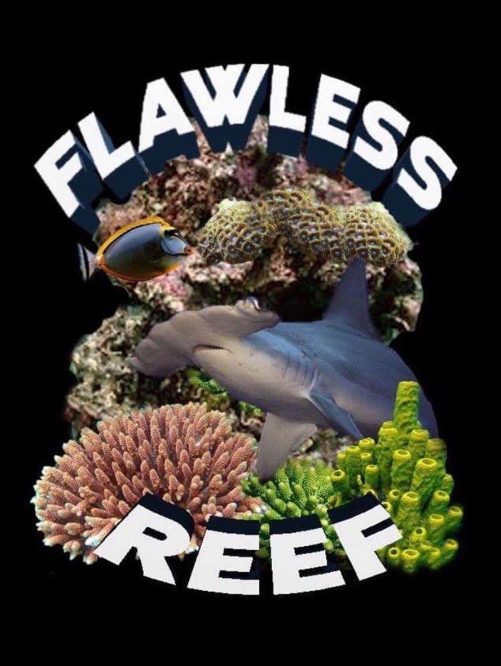 flawless reef4.jpg