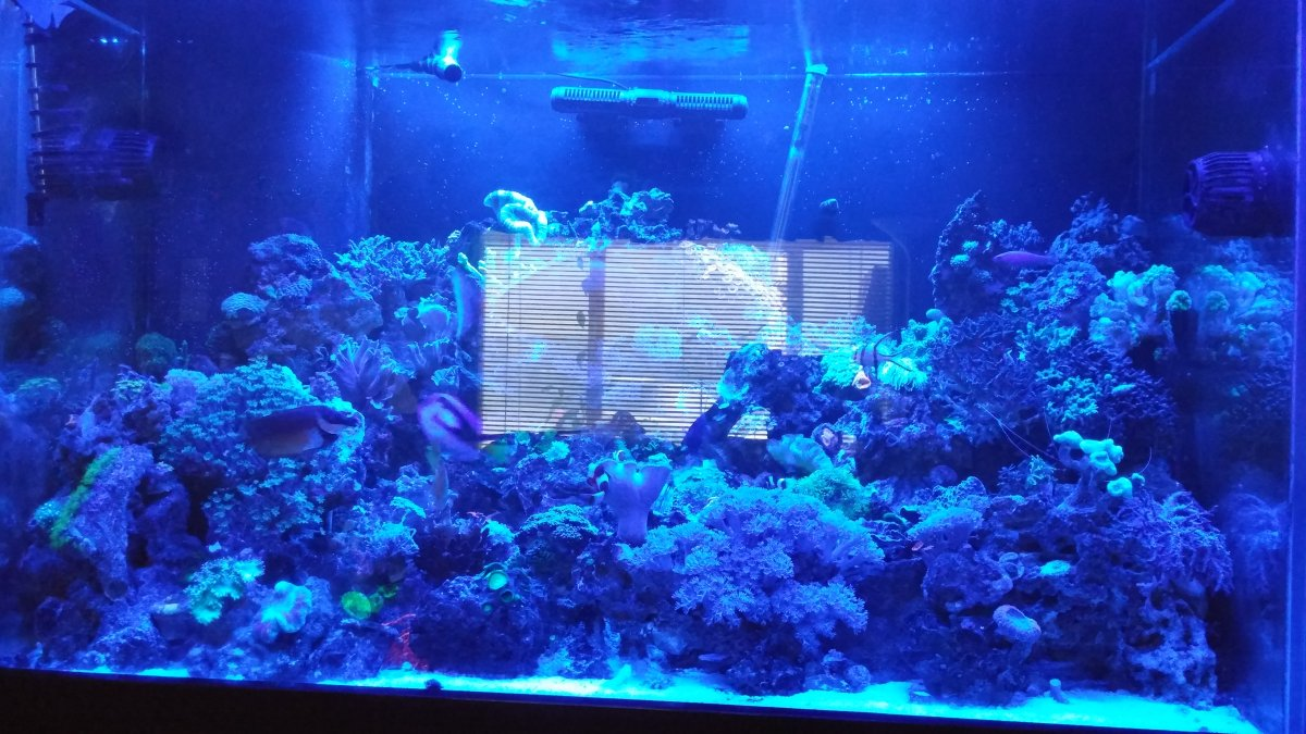 Fluval sea marine reef full spectrum performance led strip light fluval sea performance led strip lightg fluval5g aloadofball Image collections