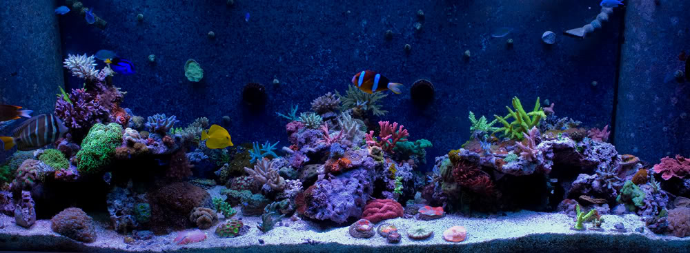 fts 5 march 2011.jpg