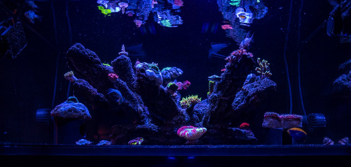 FTS-8-7-20-small.jpg