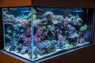 FTS from Right.jpg