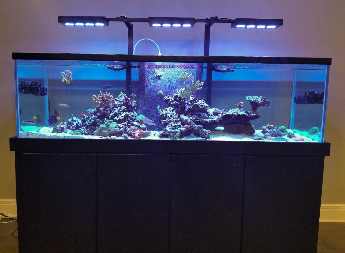 Looking for advice/examples for center overflow aquascape ...