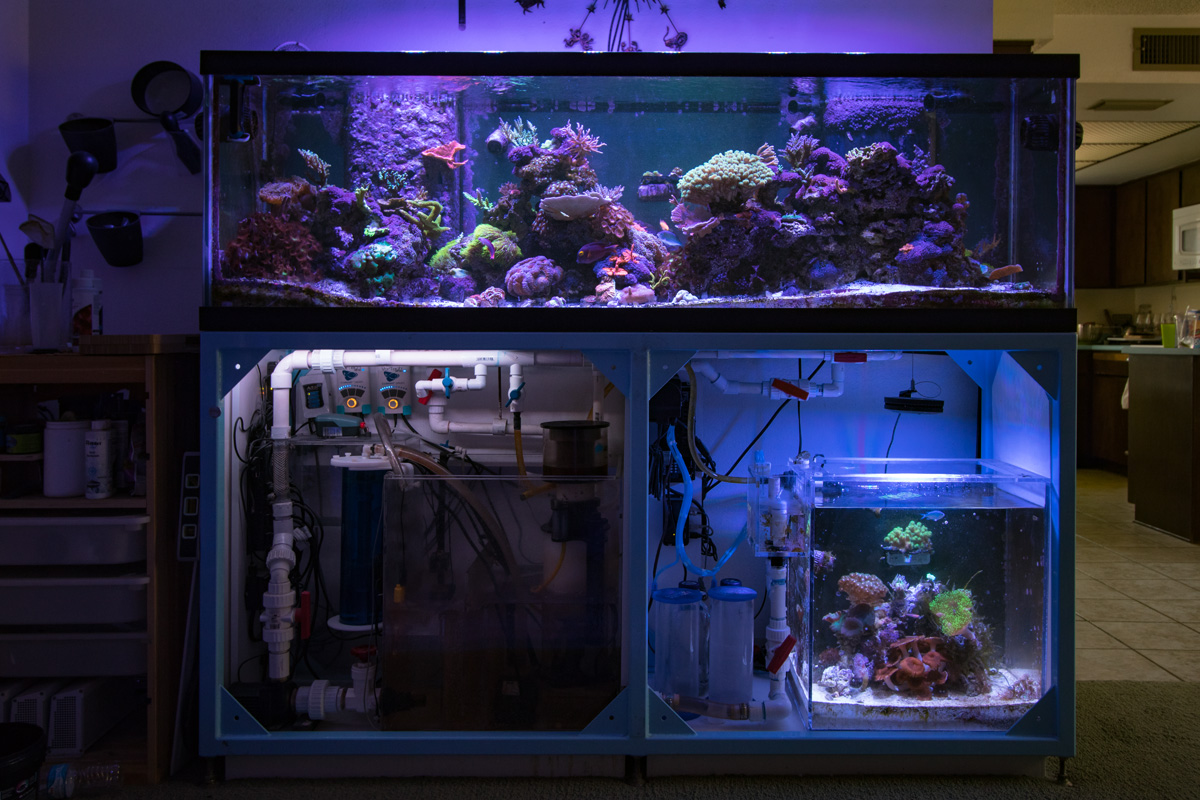 Two Tanks One Sump Who S Doing It Reef2reef
