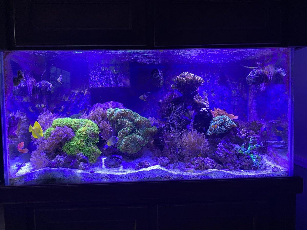 full tank 3.11.21.4.jpg