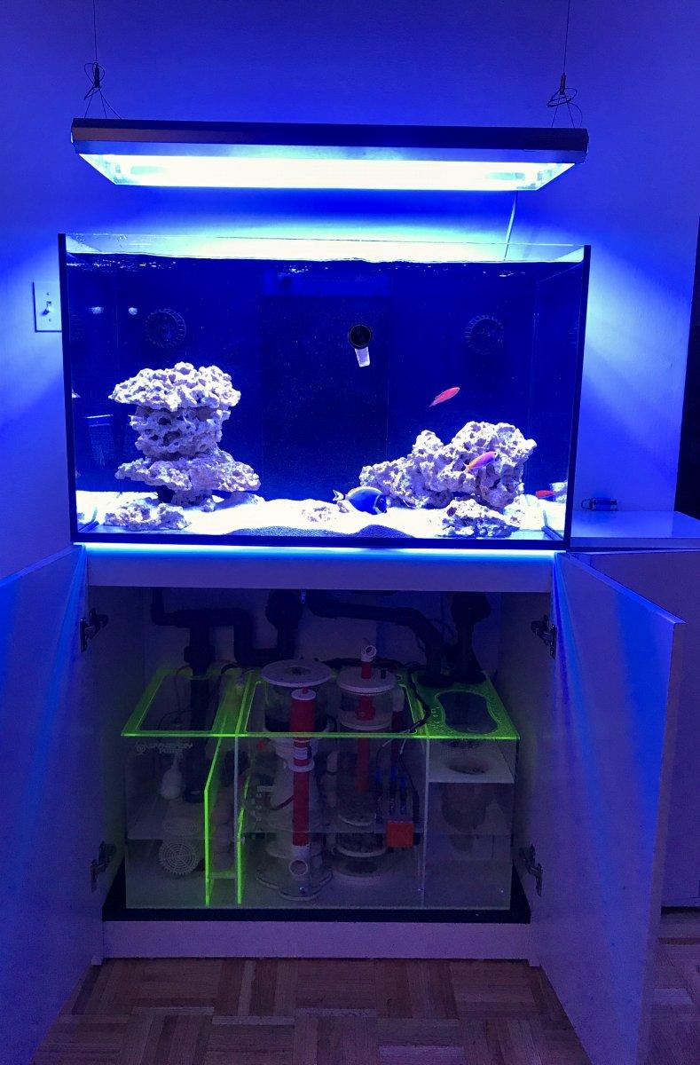 Marvin S Reefer 250 Reef2reef Saltwater And Reef