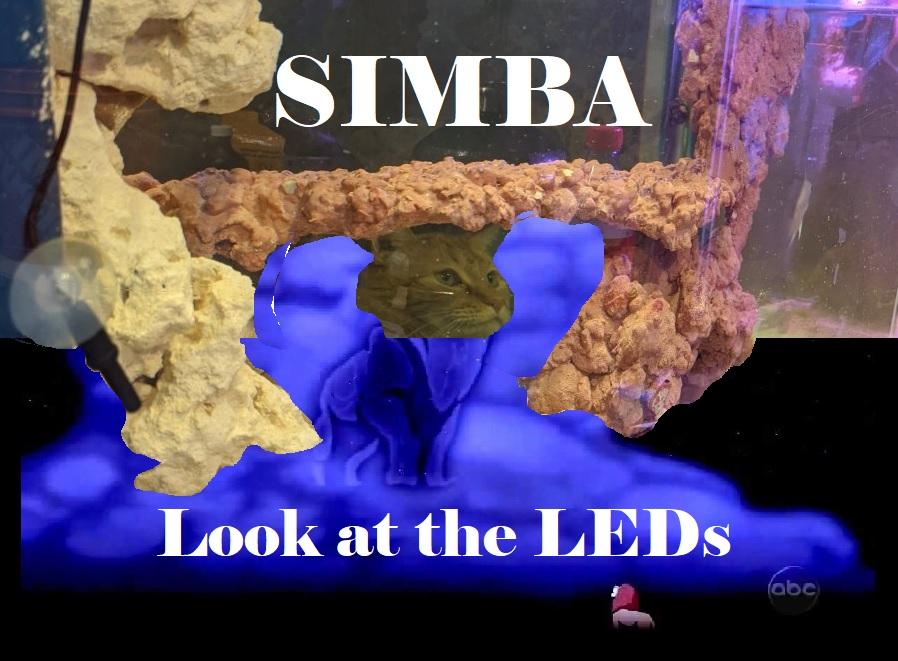 Funny Simba R2R sub.jpg