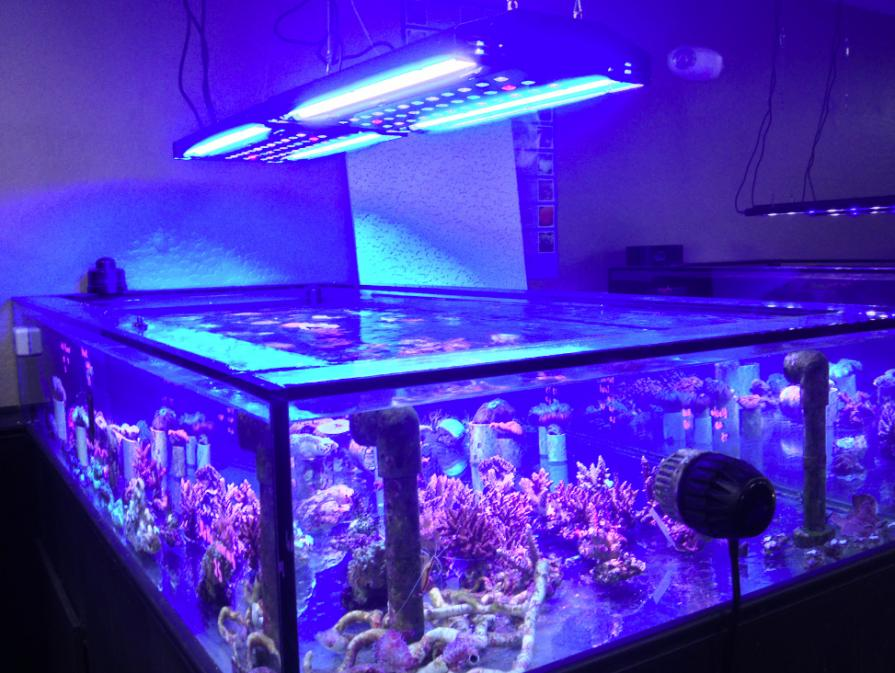 LED + T5 Combo - Where are the good fixtures??? | REEF2REEF ...