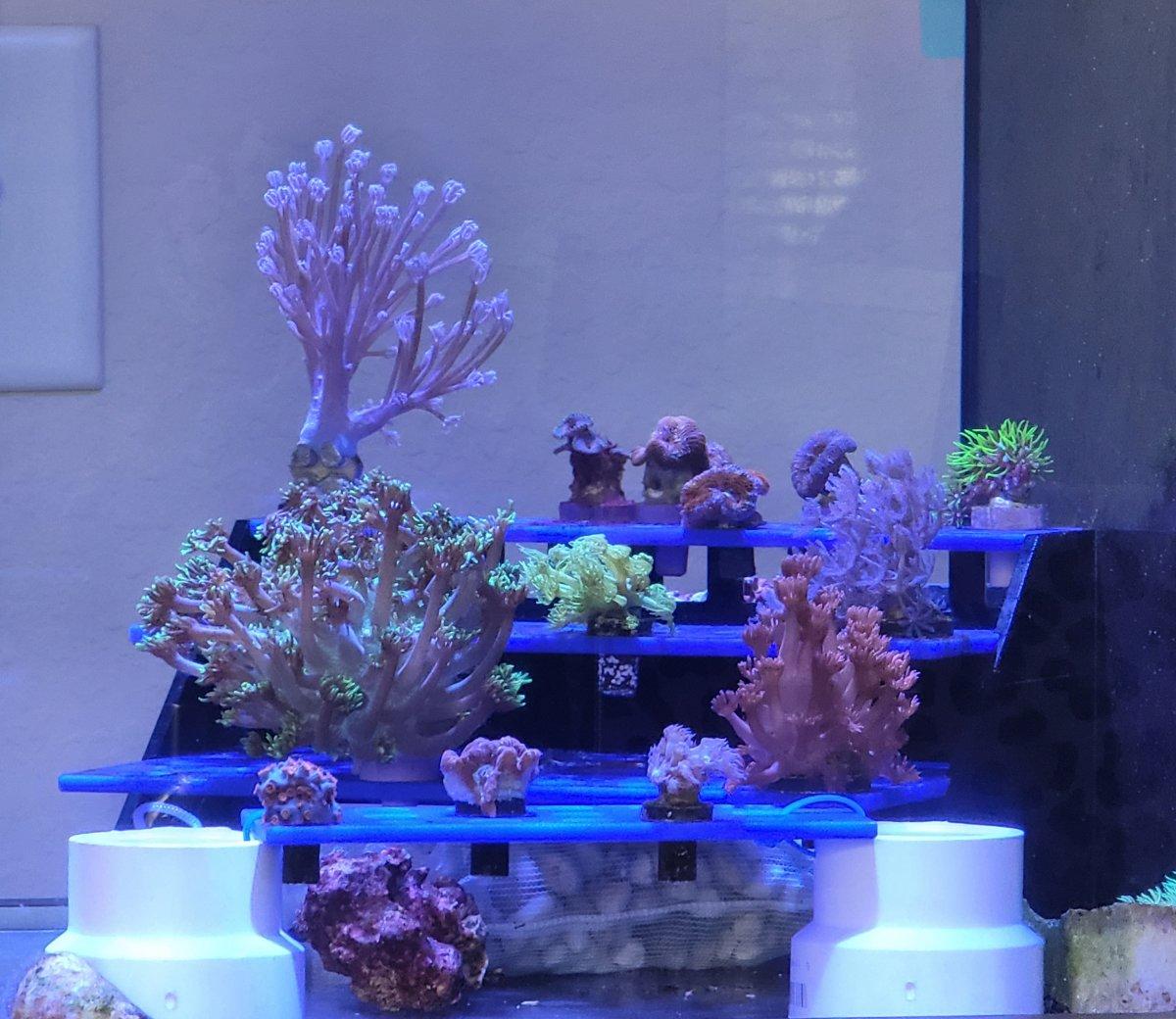 Great Barrier Reef Clear Water.jpg