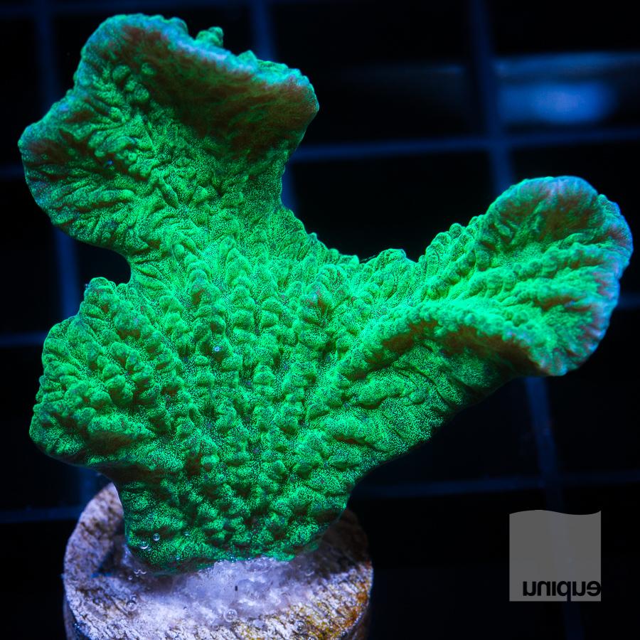 green cap 32 22.jpg