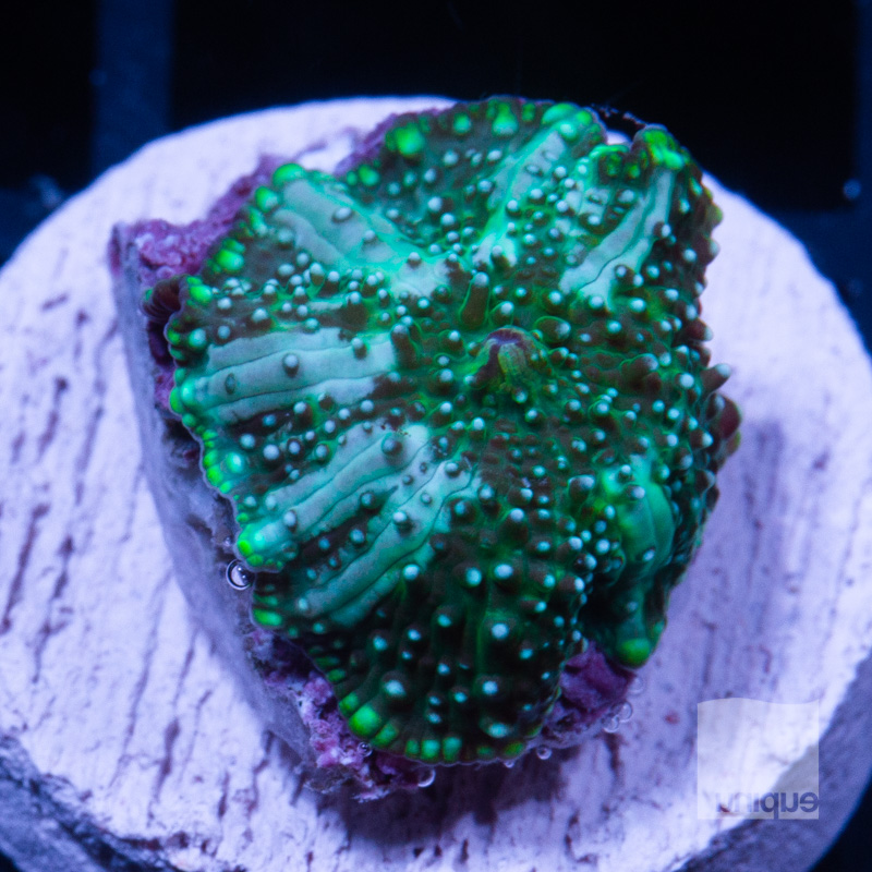 Green Interstellar 59 39.jpg