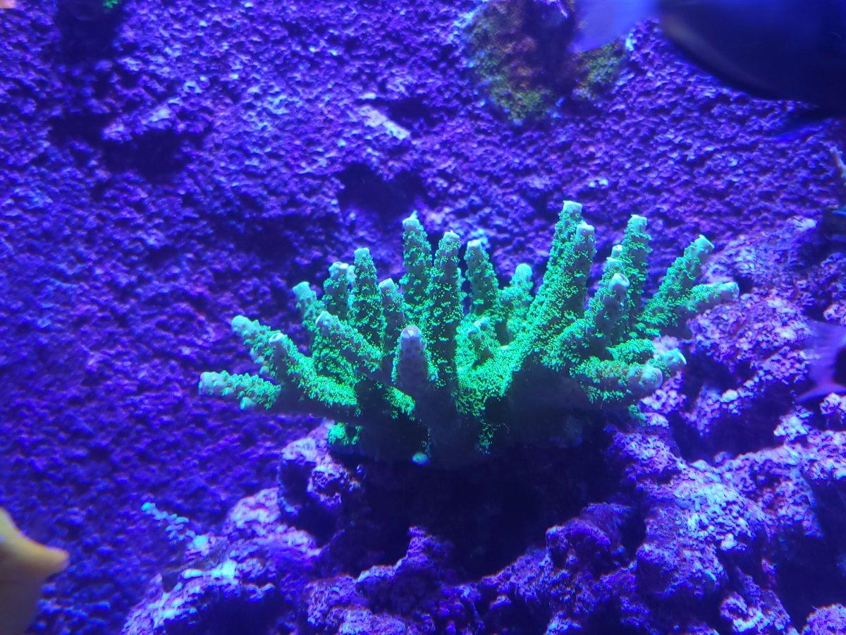 Green slimer 21-4-22.jpg
