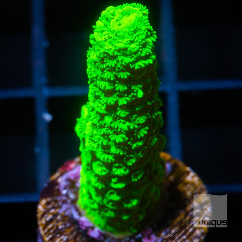Green Slimer 48 34.jpg