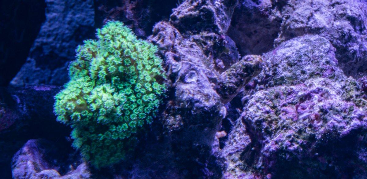 green-unknown6419.jpg