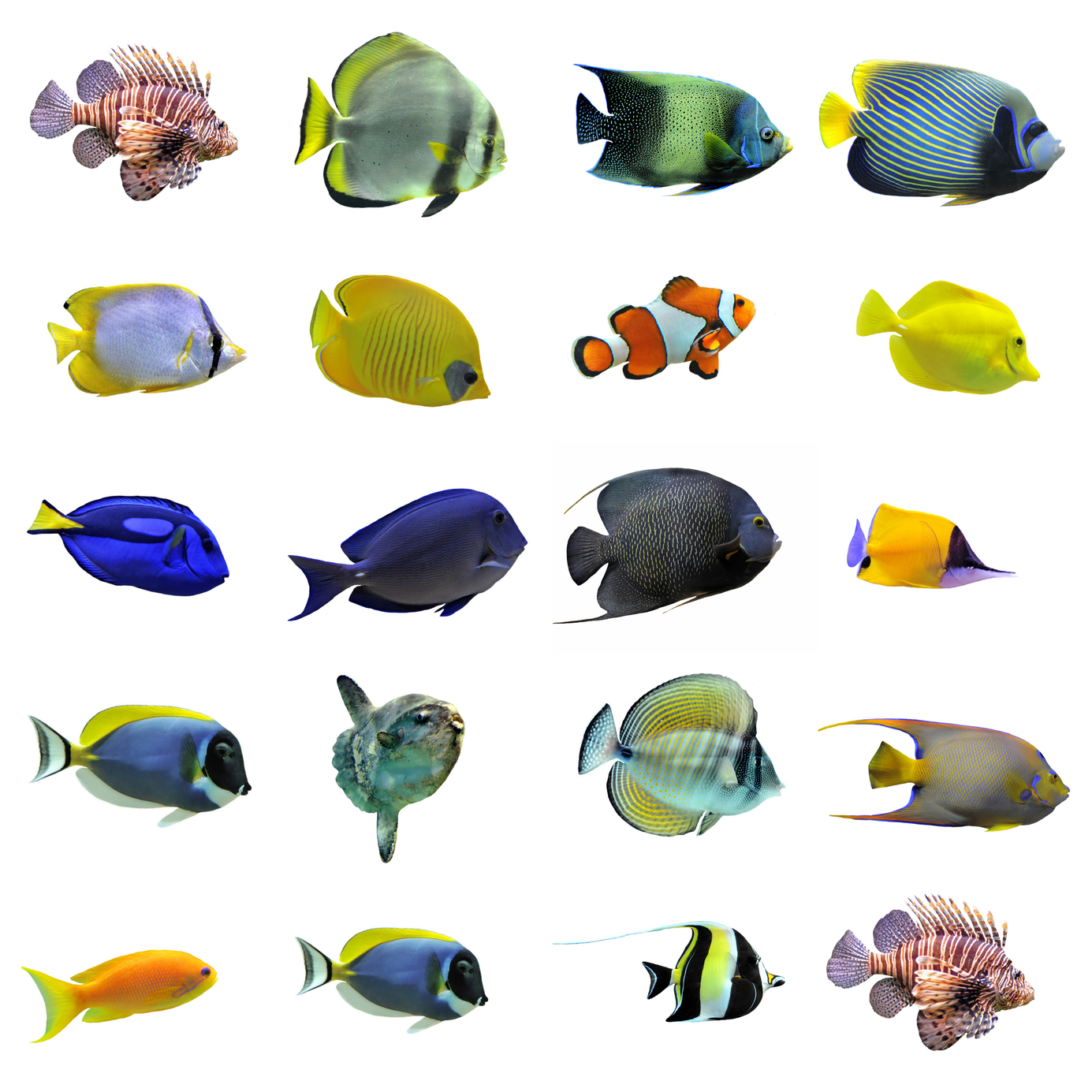 It 39 S 2016 Where Is The Ich Vaccine Reef2reef Saltwater