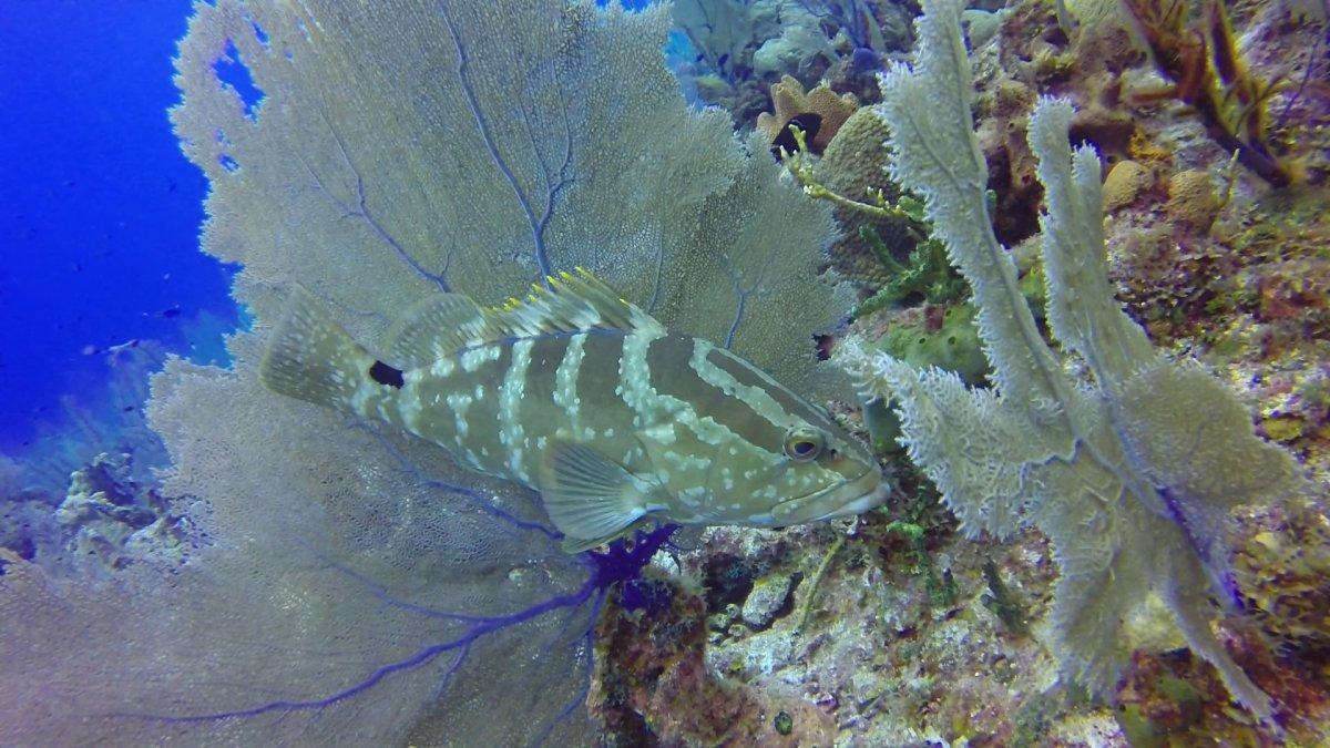 grouper-seafan.jpg