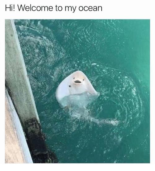 hi-welcome-to-my-ocean-23783531.png