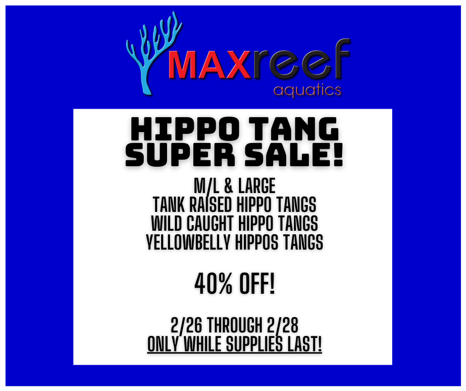 Hippo Tang Super Sale.png
