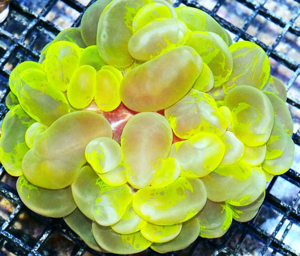 HP S0537 139 Tie Dye Electric Bubble.jpg