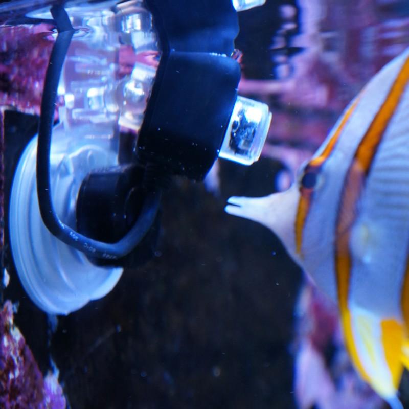 ic_reefcam_underwater.jpg