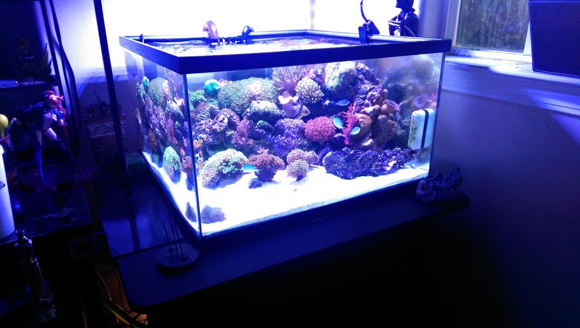 Aliexpress.com : Buy Marine LED light coral grow reef tank
