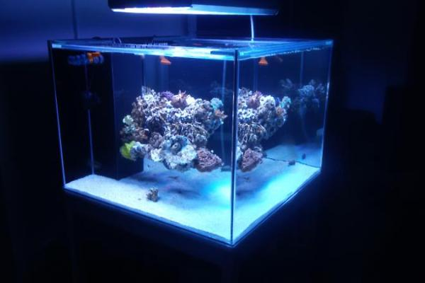 60g Cube Rimless Build with Floating Aquascape REEF2REEF Saltwater ...