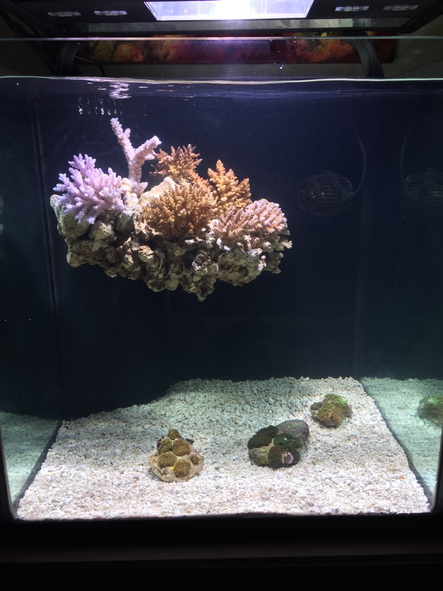 Build Thread - 60g Rimless with Floating Aquascape ...