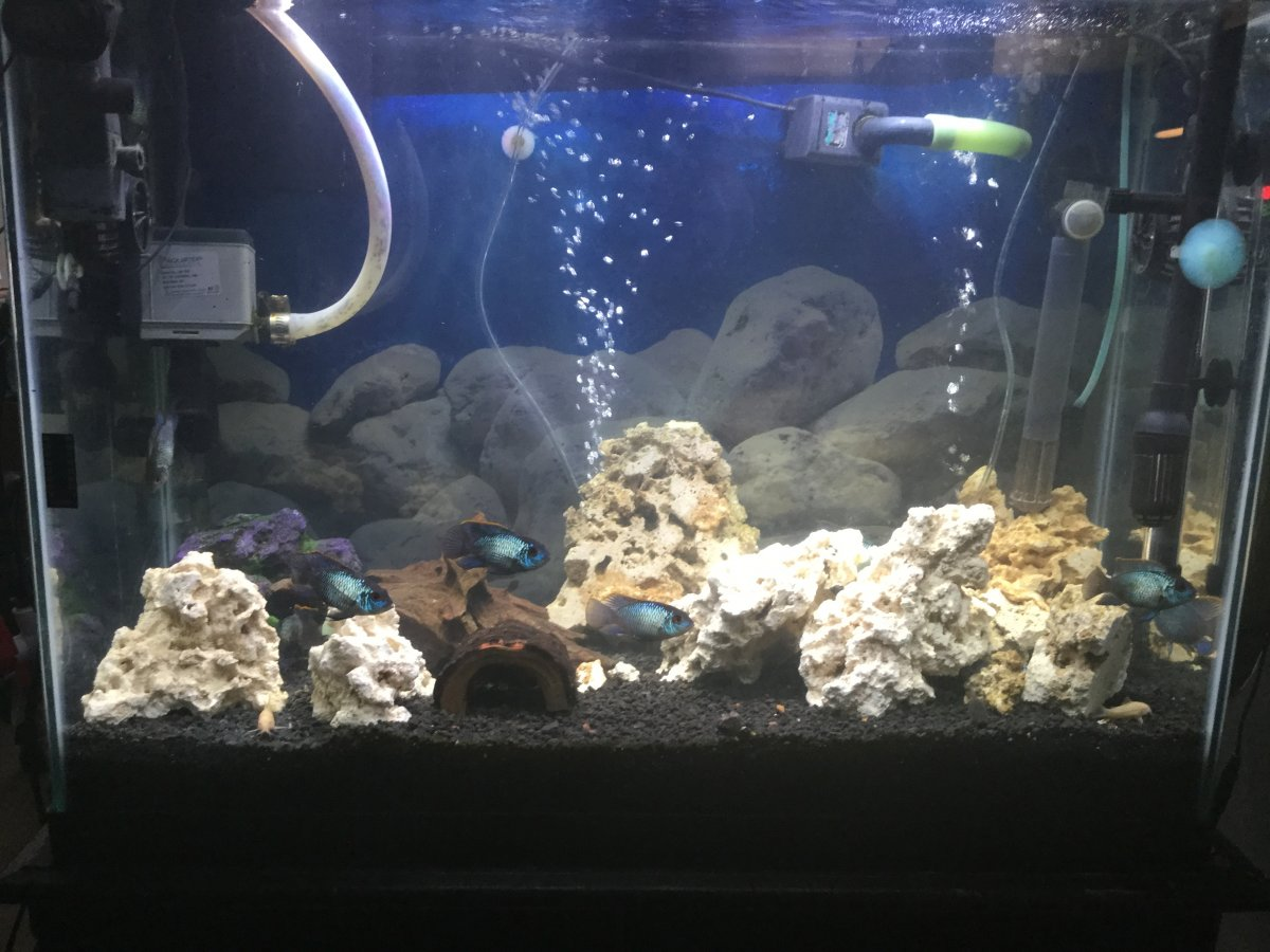 Bescher 39 s start of a new build reef2reef saltwater and for Starting a saltwater fish tank